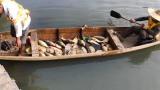 广州旺旺食品涉嫌偷排被查 将强碱废水直接倾倒致下游大量鱼类死亡